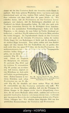 Die geologischen grundlagen der abstammungslehre (Page 101) BHL405 - Stock Photo