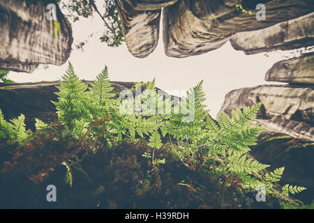 Vintage toned fern leaves on rock, looking up the mountains, selective focus. - Stock Photo