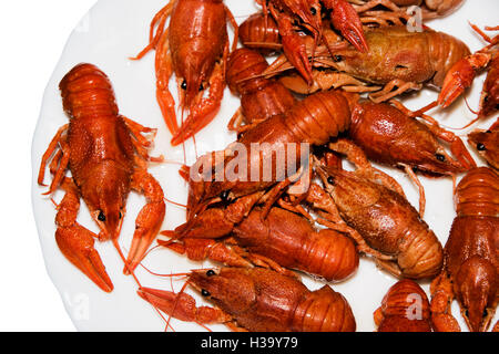 alive crayfish isolated on white background, live crayfish closeup, fresh crayfish. Boiled red crayfishes on a white - Stock Photo
