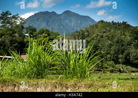 Indonesia, Lombok, Pemenang, grass growing beside farmland north of Pusuk Pass on slopes of Gunung Sabiris - Stock Photo