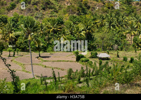 Indonesia, Lombok, Pemenang, farmland north of Pusuk Pass on slopes of Gunung Sabiris - Stock Photo
