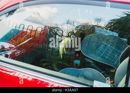 A banana skin left on a gearstick in a red Fiat 500 car - Stock Photo