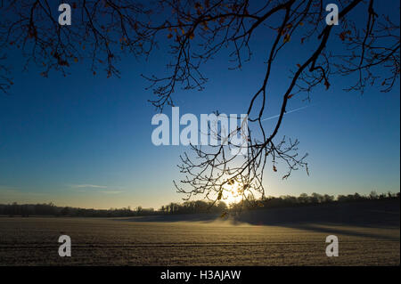 The sunrises over open fields in the british countryside, this winter scene has all of the plants and trees covered - Stock Photo