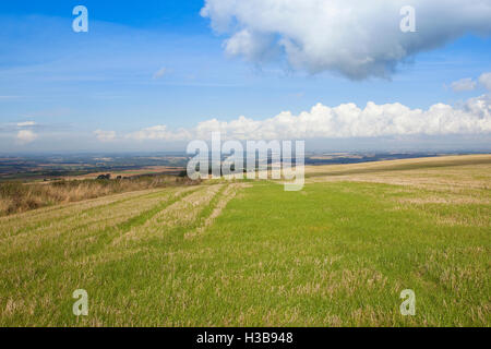 An upland stubble field with views of the Vale of York from the Yorkshire wolds under a blue cloudy sky in autumn. - Stock Photo
