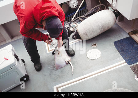 Fisherman removing hook from a ray fish - Stock Photo