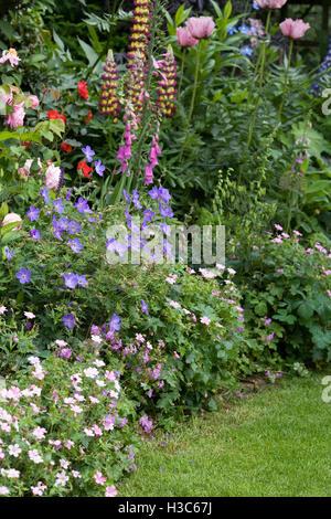 Herbaceous border in an English garden. - Stock Photo