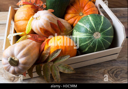 Organic pumpkins in wooden box. Fall seasonal vegetables on rustic background. Thanksgiving background. - Stock Photo