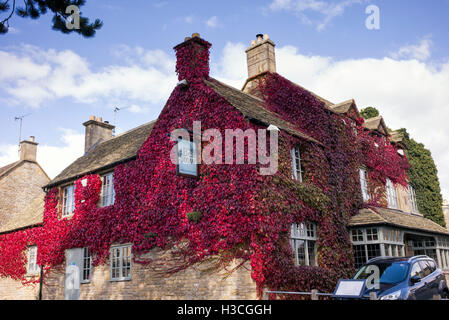 Japanese creeper / Boston ivy  covering The Bell at Stow Inn at Stow on the Wold, Gloucestershire, England - Stock Photo