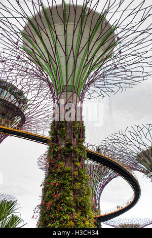 Singapore, Gardens by the Bay, Supertree Grove, OCBC skyway elevated walk
