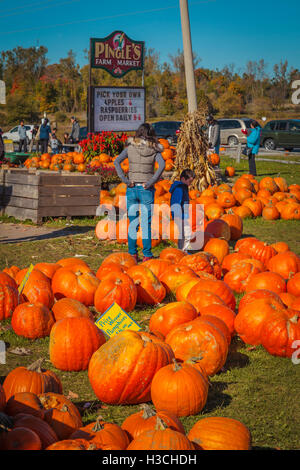 Display of pumpkins for sale on a farm in the countryside - Stock Photo