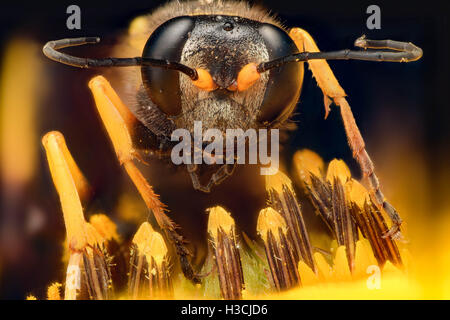 Extreme magnification - Wasp on a flower - Stock Photo