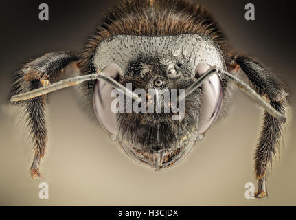 Extreme magnification - Giant black wasp - Stock Photo
