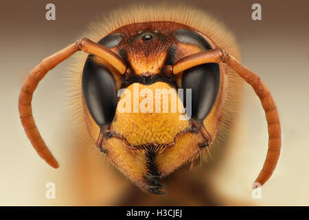 Extreme sharp closeup of wasp head - Stock Photo