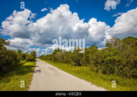 Road into Deer Prairie Creek Preserve in Venice Florida Stock Photo