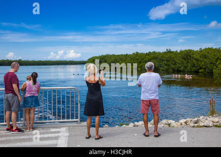 People veiwing birds in J N Ding Darling National Wildlife Refuge on Sanibel Island Florida - Stock Photo