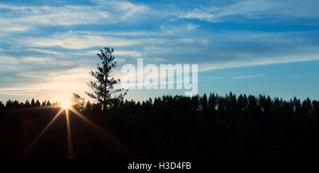 Scenic view of silhouette trees against blue sky during sunrise - Stock Photo