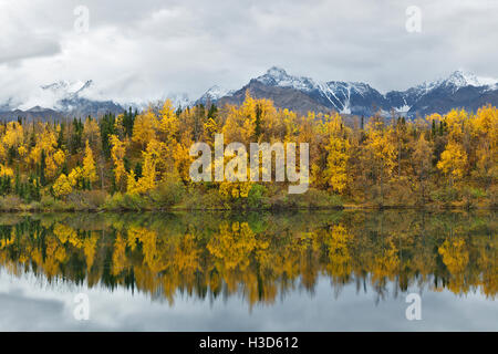Fall colors of the boreal forest reflected in a still lake, Alaska, USA - Stock Photo