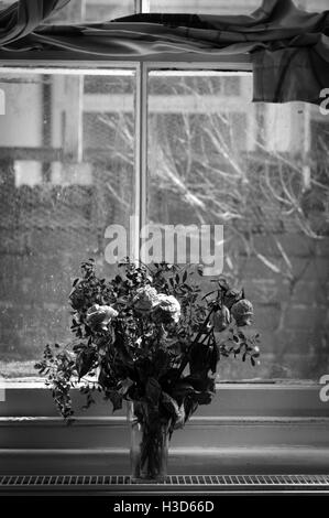 Wilted flowers in the window. - Stock Photo