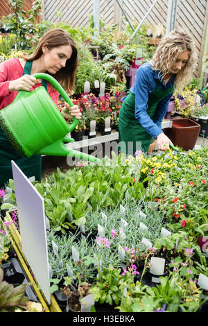 Female florist watering plant with watering can - Stock Photo