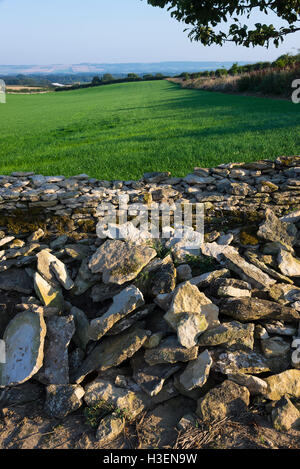 Repairs Being Undertaken to a Drystone Wall on a Farm in Sawdon North Yorkshire England United Kingdom UK - Stock Photo
