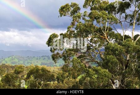 A partial rainbow against a background of dark clouds and gum trees in the sunshine. - Stock Photo