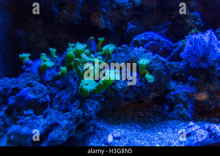 tropical coral reef close up view - Stock Photo