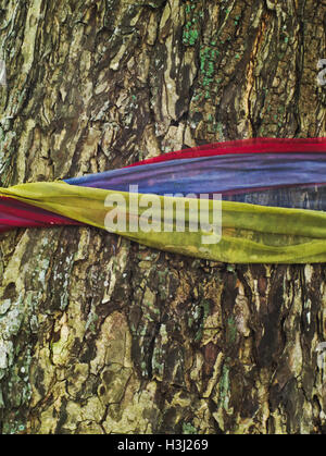 rough and old tree bark texture believed to holy and tied with colourful fabric - Stock Photo