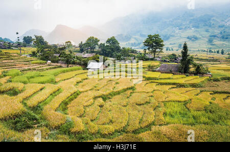 Green and yellow rice terraces with small building which surround by green mountain covered by fog all day at Lao - Stock Photo