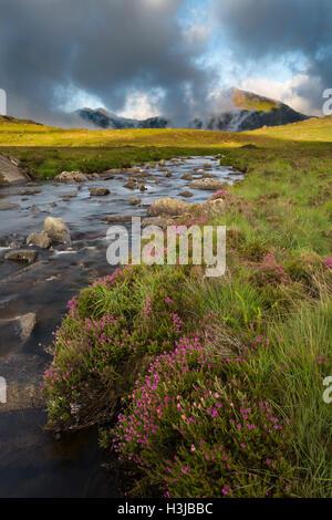Nant Gwryd flows from Llyn Cwmffynnon leading into Dyffryn Mymbyr. Wild heather grows in the foreground. - Stock Photo