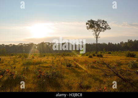 Early morning sun in the woods - Stock Photo