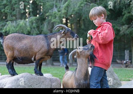 boy giving goat a treat, Wildpark Schwarze Berge, Lower Saxony, Germany - Stock Photo