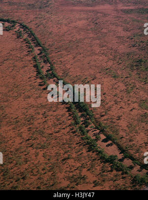 River red gum (Eucalyptus camaldulensis) - Stock Photo
