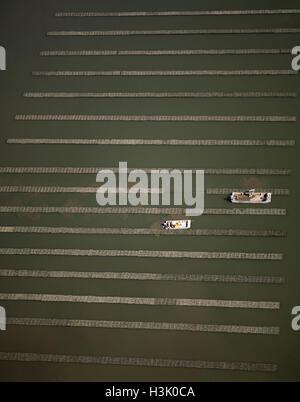 Oyster racks - Stock Photo