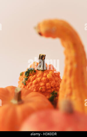 closeup of an assortment of different pumpkins and squashes against a beige background - Stock Photo