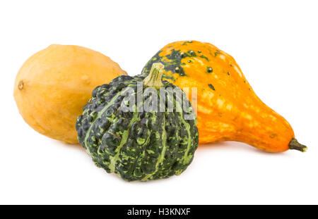pumpkins decorative colorful various gourds ornamental assorted - Stock Photo