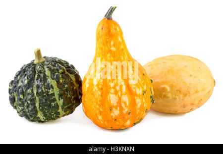 pumpkins decorative colorful various gourds ornamental - Stock Photo