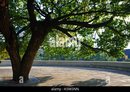 The Survivor Tree, a 100-year-old Elm tree that survived the Murrah Federal Building bombing on April 19, 1995. - Stock Photo