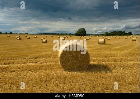 Round straw bales in field, Cherington, Gloucestershire, UK - Stock Photo