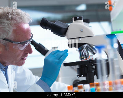 Scientist preparing a sample slide containing a human specimen to view under a microscope in laboratory for medical - Stock Photo