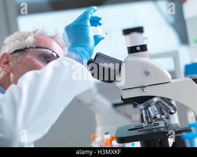 Scientist preparing a sample slide containing a human blood specimen to view under a microscope in laboratory for - Stock Photo
