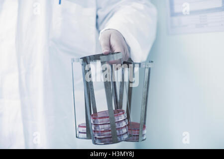 Scientist carrying rack with petri dishes in laboratory - Stock Photo