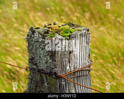 rusty fence wires & aged square wooden post with lichen & moss growth on top in grassy upland above Swindale Cumbria - Stock Photo