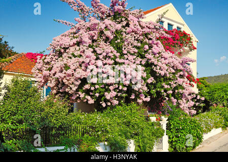 A house with flowers at the port of Fiskardo in Kefalonia island, Greece - Stock Photo