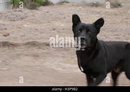 Black dog chasing us - Stock Photo