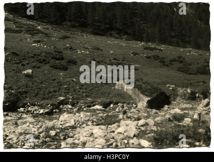 GERMANY - CIRCA 1960s: forest with pine trees in Alps - Stock Photo