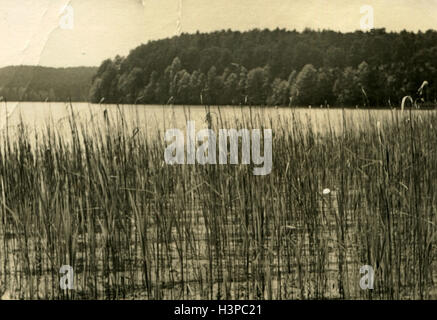 GERMANY - CIRCA 1960s:view of the lake, the shores of which are overgrown with reeds - Stock Photo