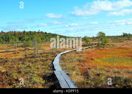 Colorful autumn landscape on bog Torronsuo National Park, Finland - Stock Photo