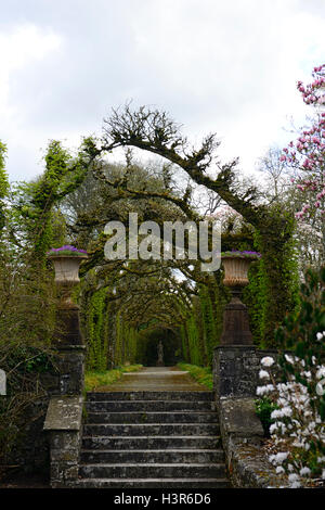 Hornbeam cloisters Birr castle gardens gardening shape shaped hedge hedging formal train trained RM Floral Ireland - Stock Photo
