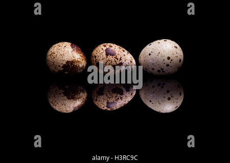 Three quail eggs in row isolated on black reflective background - Stock Photo