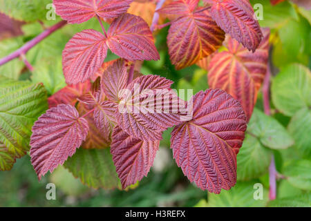 Beautiful background from red and green sheet in autumn season of the year - Stock Photo